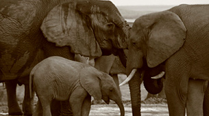 Monitoring the illegal killing of Elephants (MIKE)